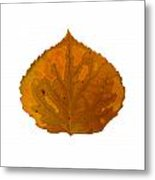 Brown And Orange Aspen Leaf 1 Metal Print