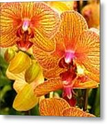 Smiling Brown And Pink Orchids Metal Print
