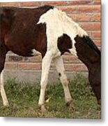 Brown And White Horse In Cotacachi Metal Print