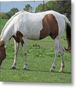 Brown And White Painted Horse Metal Print