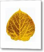 Brown And Yellow Aspen Leaf 2 Metal Print