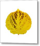 Brown And Yellow Aspen Leaf 3 Metal Print