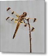 Brown And Yellow Dragonfly On A Twig Metal Print
