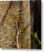 Brown Anole Lizard In Florida Metal Print