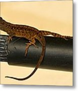 Brown Anole On Pipe Metal Print