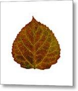 Brown Aspen Leaf 2 Metal Print