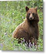 Canadian Bear Metal Print