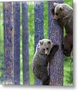 Brown Bear Climbing Lesson Metal Print