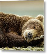 Brown Bear, Katmai National Park, Alaska Metal Print