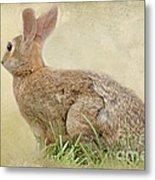 Brown Bunny Metal Print
