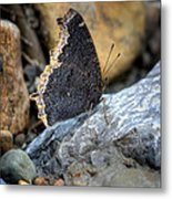 Brown Butterfly Cuyahoga Valley Metal Print