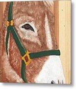Brown Donkey On Cedar Metal Print