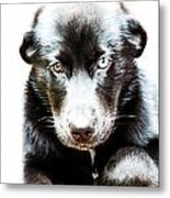 Sweet Puppy Metal Print