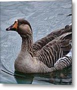 Brown Feathered Goose Metal Print