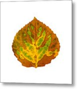 Brown Green And Yellow Aspen Leaf 3 Metal Print