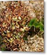 Brown Green Hydrangea Metal Print