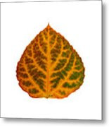 Brown Green Orange And Red Aspen Leaf 1 Metal Print