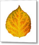 Brown Green Orange Red And Yellow Aspen Leaf 3 Metal Print