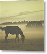 Brown Horse Metal Print