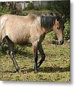 Brown Horse Walking Through A Pasture Metal Print