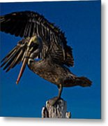 Brown King Pelican Metal Print