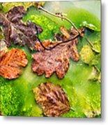 Brown Leaves In Green Pond Metal Print