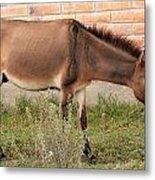 Brown Mule In Cotacachi Metal Print