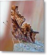 Brown Paper Moth Metal Print