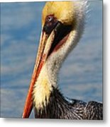 Brown Pelican In Morning Sun Metal Print