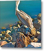 Brown Pelican In San Carlos-sonora Metal Print