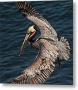 Brown Pelican Landing 2 Metal Print