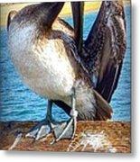 Brown Pelican Preen  Metal Print