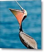 Brown Pelican Showing Pouch Metal Print