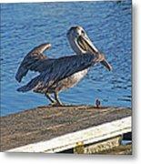 Brown Pelican Takes Flight Metal Print