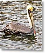 Brown Pelican1 Metal Print