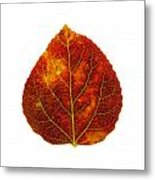 Brown Red And Yellow Aspen Leaf 1 Metal Print