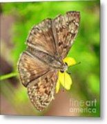 Brown Skipper Butterfly Square Metal Print