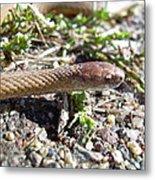 Brown Snake Metal Print