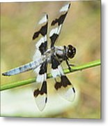 Brown Striped Double Winged Dragonfly Metal Print