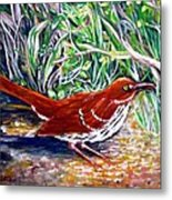 Brown Thrasher In Sunlight Metal Print