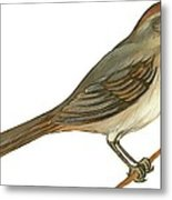 Brown Towhee Metal Print by Anonymous