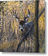 Brush Buck Metal Print