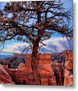 Bryce Canyon Middle Tree Metal Print