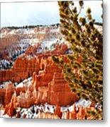 Bryce Canyon Pine Side Metal Print