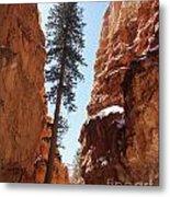 Bryce Canyon Wall Street Metal Print