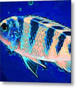 Bubbles - Fish Art By Sharon Cummings Metal Print