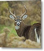 Buck Fever Metal Print