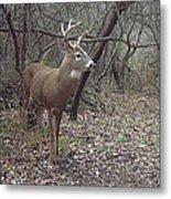Buck In The Woods Metal Print