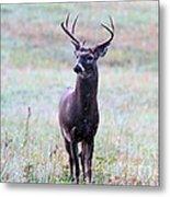 Buck Looking For A Doe Metal Print