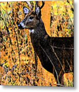 Buck Scouting For Doe Metal Print